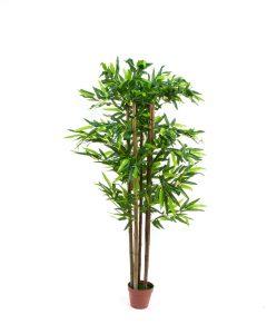 צמח במבוק 130 סמ