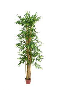 צמח במבוק 180 סמ