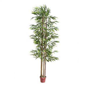 צמח במבוק 220 סמ