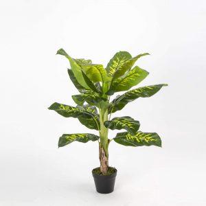 צמח דיפנבכיה 90 סמ