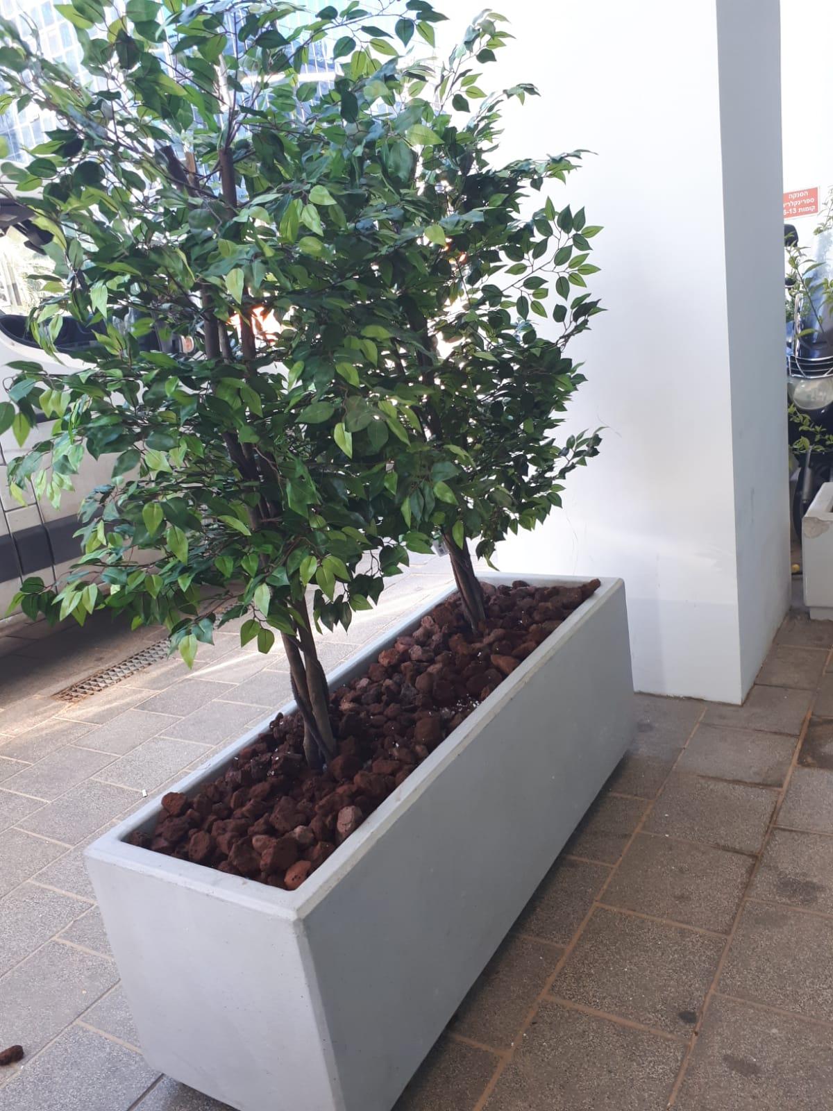 צמחיה מלאכותית בעדנית