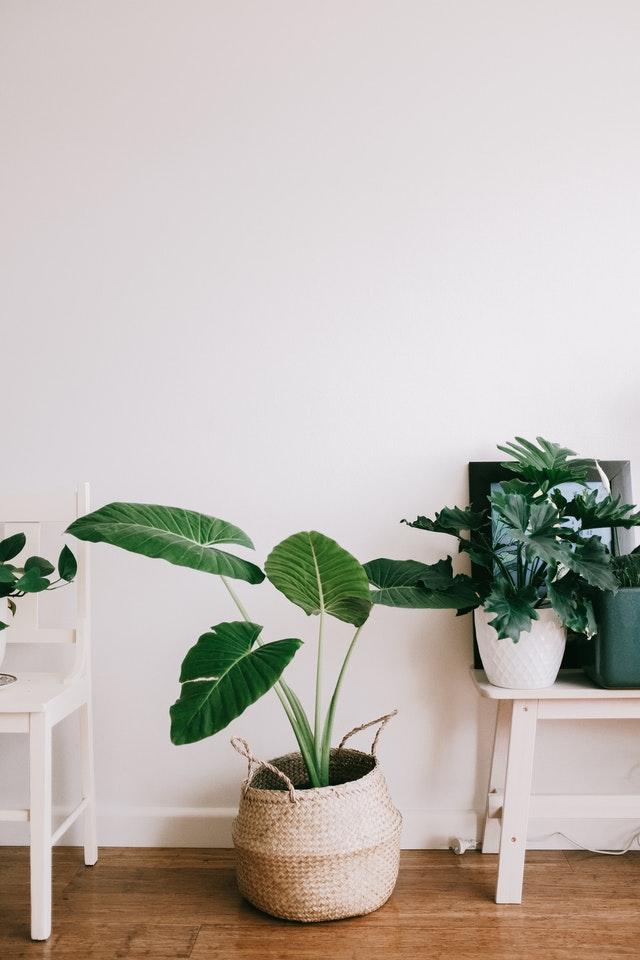 עצים מלאכותיים בסלון