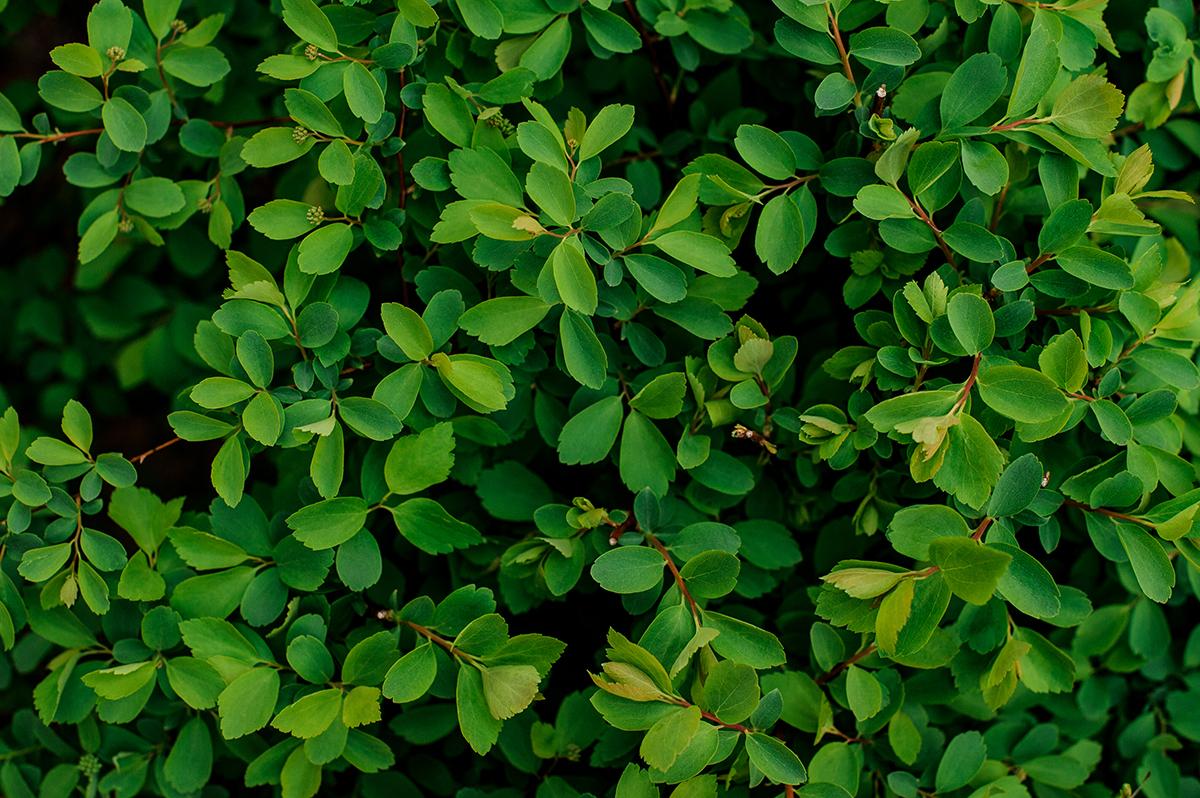 קיר ירוק צמחייה מלאכותית