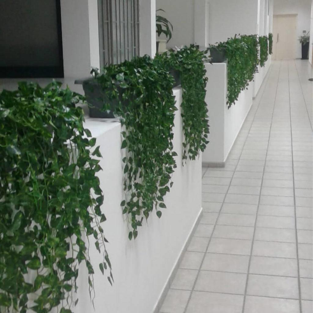 צמחיה ירוקה נופלת